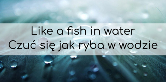 polish sayings & polish proverbs