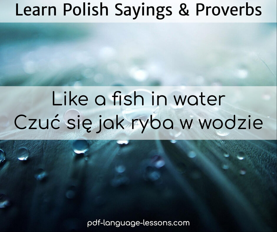 Polish Quotes: Learn Top 10+ Polish Sayings & Proverbs